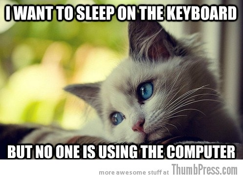 First-World-Problems-Cat-1