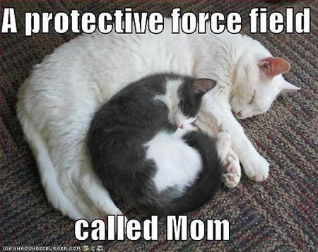 dd533eddd3325b60beda1c76e3af3f7f_meme-mom-is-a-protective-force-field-source-good-friends-are-protective-mom-meme_450-357