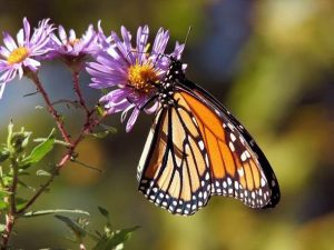 4 Lessons My Daughter Learned Raising Monarch Butterflies